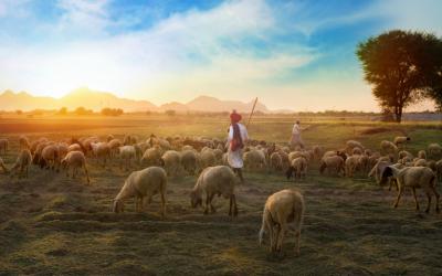 Почему Иисуса называют Добрым Пастырем?