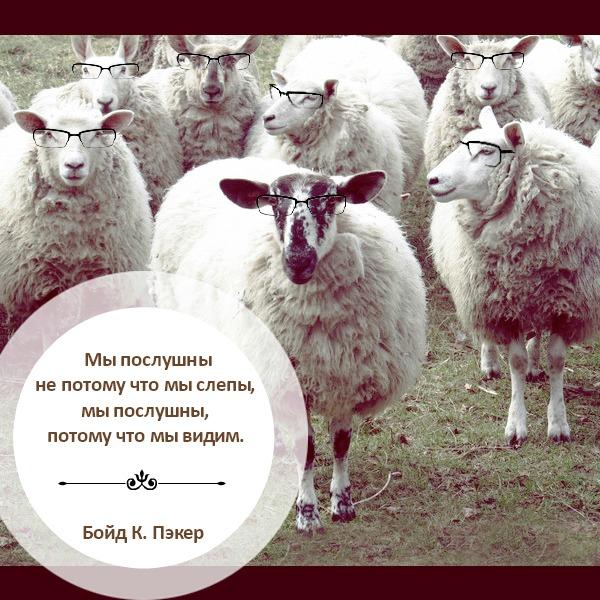 Овцы слышат голос пастыря