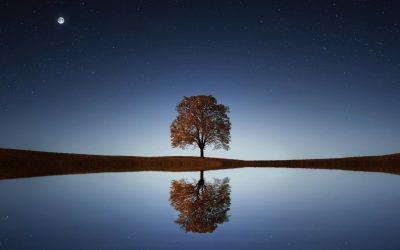 Одиночество: бремя или благословение?